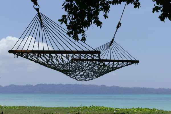aquatic plants beach daylight hammock